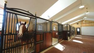 Mathy-equestrian-5