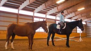 Morgan-equestrian-2