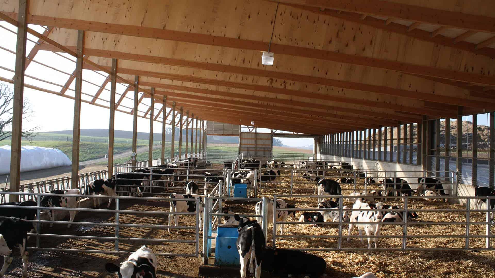 ripp-dairy-valley-3