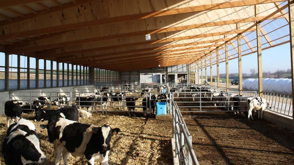 ripp-dairy-valley-4
